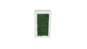 Image of a Hedge Pedestals White
