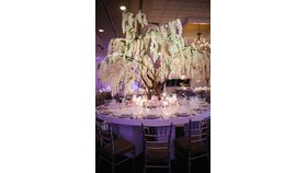 Image of a 12'ft Blush Wisteria Tree