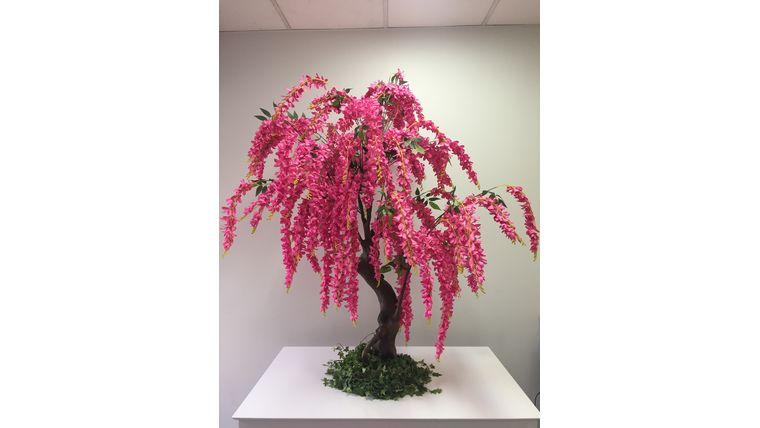 Picture of a 12'ft Pink Wisteria Tree