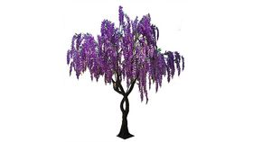Image of a 12'ft Purple Wisteria Tree