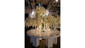 Image of a 12'ft White Wisteria Tree