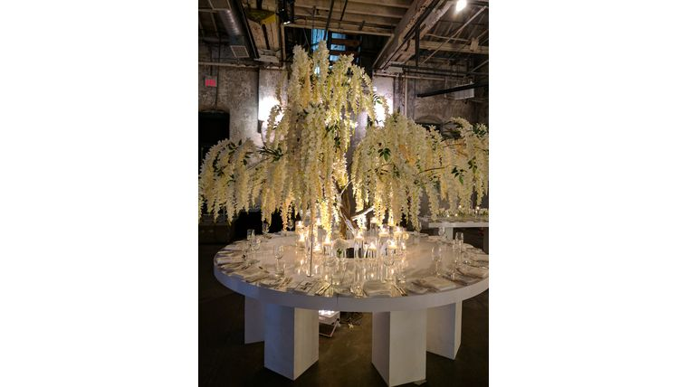 Picture of a 12'ft White Wisteria Tree