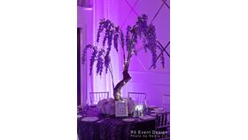 Image of a 5' purple Wisteria Trees