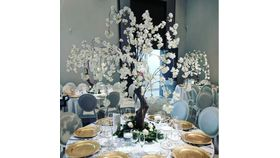 Image of a 5' White Cherry Blossom Trees