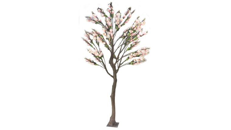 Picture of a 13'ft Light Pink Magnolia Tree