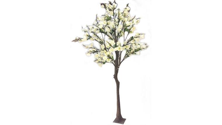 Picture of a 13'ft White Magnolia Tree