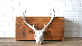 Image of a Skull With Antlers