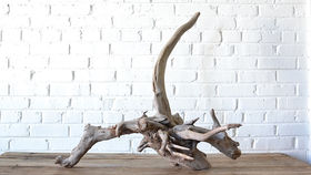 Image of a Large Driftwood