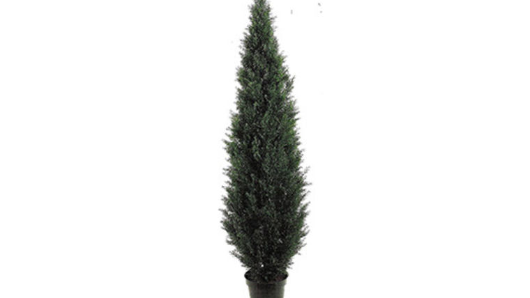 Picture of a Foliage: Topiary Cedar Pine Tree , 6' in pot