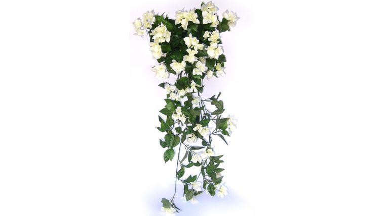 Picture of a Foliage: Vine, Bouganvilla Cluster: White, 12 per Tote