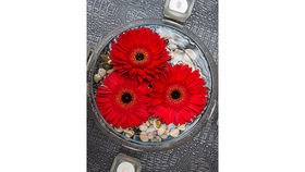 Image of a Live Floral: Floating Bowl w/ Gerber Daisies