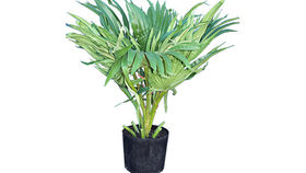 Image of a Foliage: Palm, 3' Fountain Case of 2