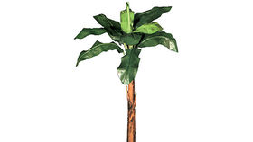 Image of a Foliage: Palm, Banana Tree Kit Case of 5 Mixed Height