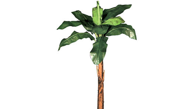 Picture of a Foliage: Palm, Banana Tree Kit Case of 5 Mixed Height