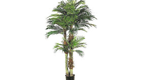 Image of a Foliage: Palm, 6' Phoenix Case of 4