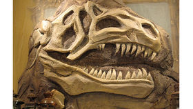Image of a T-Rex Fossil Wall