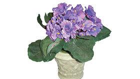 Image of a Silks: African Violet