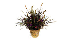 Image of a Foliage: Italia Grass/Wild Flowers, Potted