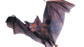 Image of a Prop: Halloween, Bats hanging (Each)