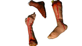 Image of a Prop: Halloween, Bloody Arms/Legs/Feet set of 4