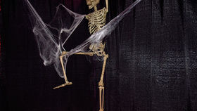 Image of a Prop: Halloween, Life-Size Skeleton 5'