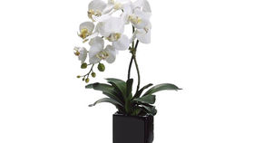 Image of a Silks: White Orchid