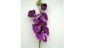 Image of a Floral: Purple Orchid (stem)