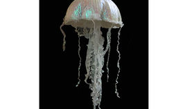 Image of a Jellyfish