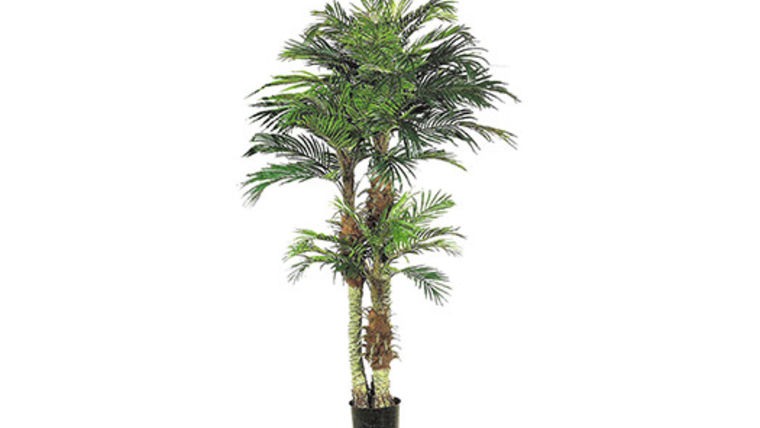 Picture of a Foliage: Palm, 4' Phoenix Case of 4