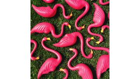 Image of a Flock of 1 Dozen Original Don Featherstone Pink Flamingos