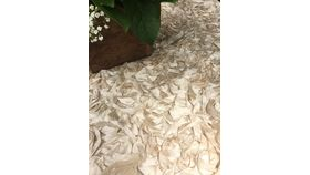 "Image of a Curly Satin - Champagne 120"" round"