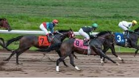 Image of a A Night at the Races - Win Package