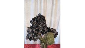 Image of a Black Hydrangea Flower