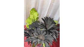 Image of a Black Daisy with Green Leaves