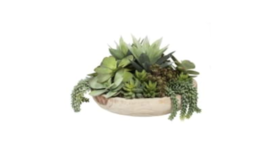"Image of a 17"" Succulent Arrangement"