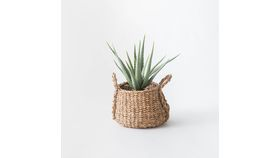 "Image of a 17"" Potted Aloe"