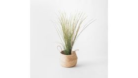 "Image of a 41"" Grass Plant"