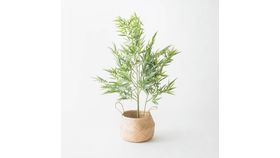 Image of a 4' Bamboo Palm Plant