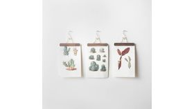 Image of a Botanical Cactus Wall Hangings