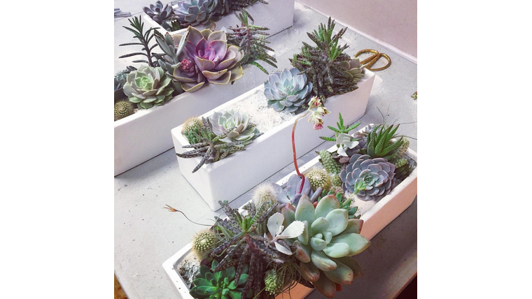 Picture of a Succulent Garden