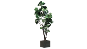 Image of a Artificial Fiddle Leaf Fig