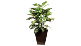 Image of a Artificial Foliage Plant
