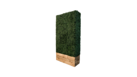 Image of a Hedge Wall