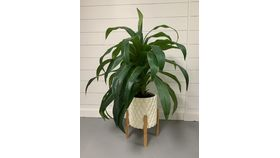 Image of a 4' Green Leafy Artificial Potted Plant
