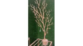 Image of a 4' GOLD MANZANITA TREE