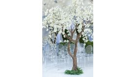 Image of a 10'ft White Cherry Blossom Tree