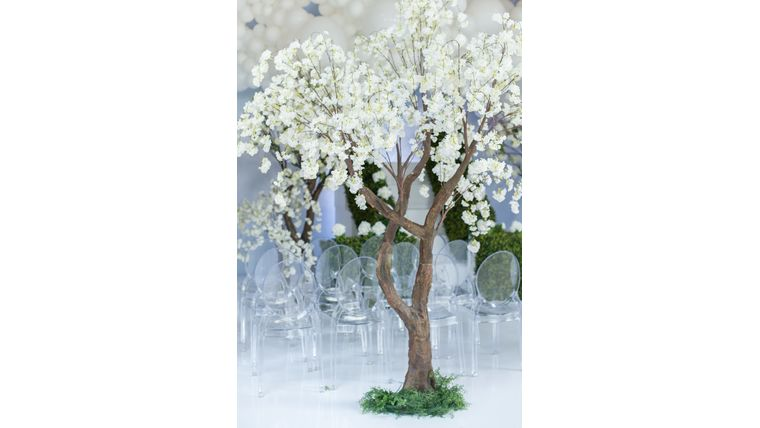 Picture of a 10'ft White Cherry Blossom Tree