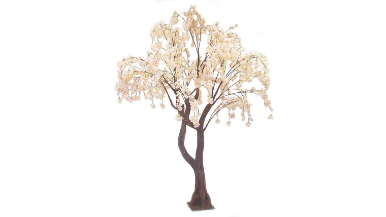 Picture of a 10'ft Blush Cherry Blossom Tree