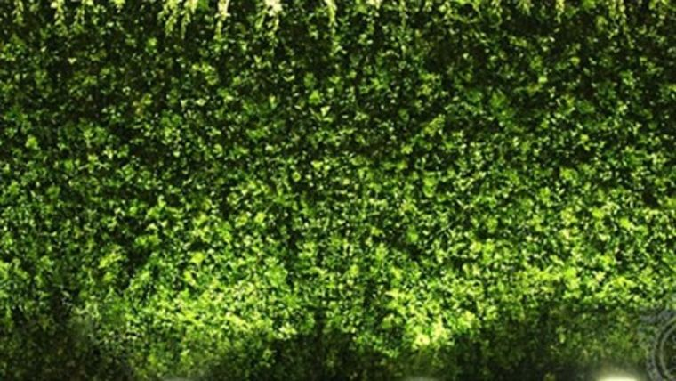 Picture of a 4'ft x 8'ft Hedge Wall