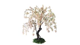 Image of a 5'ft Blush Cherry Blossom Tree